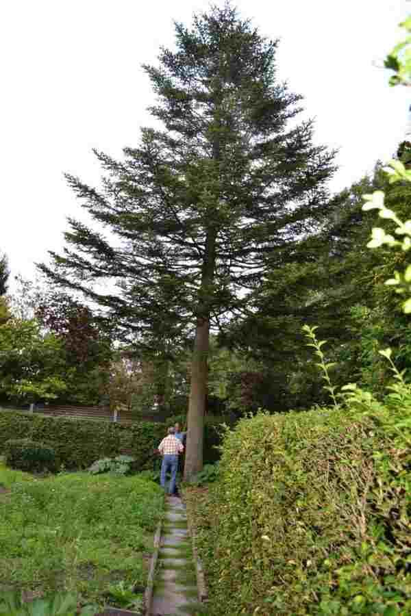 Baum mit Landepiste
